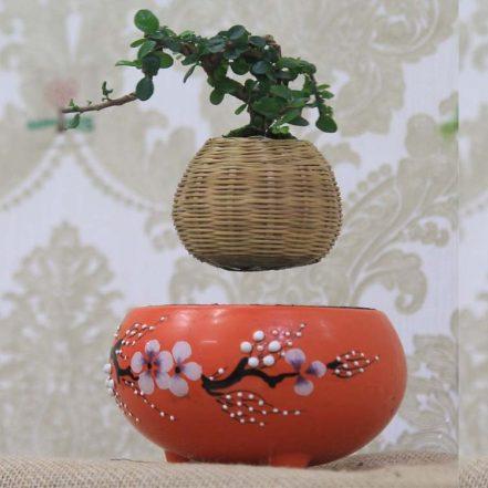 bonsai-bay-1-min