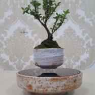 bonsai-bay-3-min